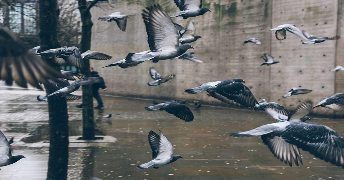 allontanamento colombi siracusa ddteam