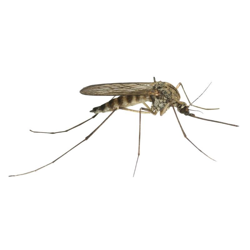 mosche e zanzare disinfestazione ddteam